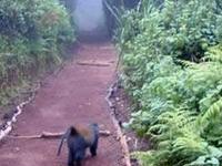Kilimanjaro Trekking Day Trip