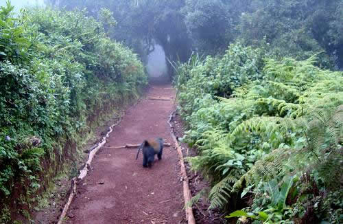 Kilimanjaro Trekking Day Trip Photos