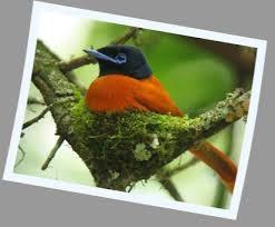 Uganda Birding Safari Photos