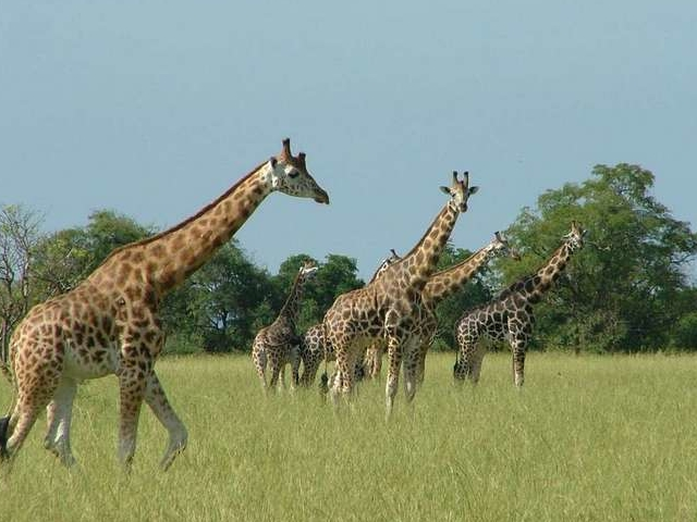 Murchison Falls NP and Source of the Nile Uganda Photos