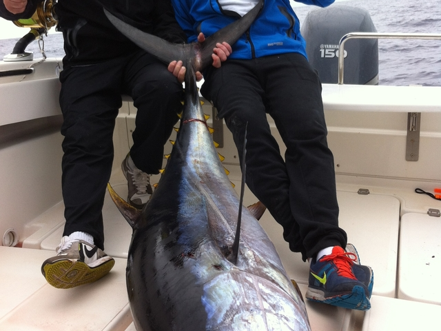 Azores Big Game Fishing Photos