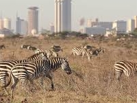Nairobi National Park Copy