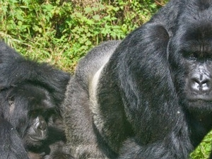 Uganda Wildlife Expedition Photos