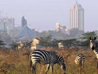 A Visit to Nairobi National Park