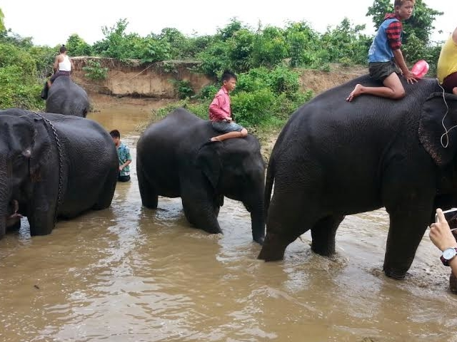 Escaping from Yangon and Visit Win Ka Baw Elephant Camp Photos
