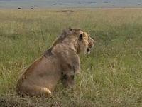 Nalepo Mara Lodge 3 Days Maasai Mara