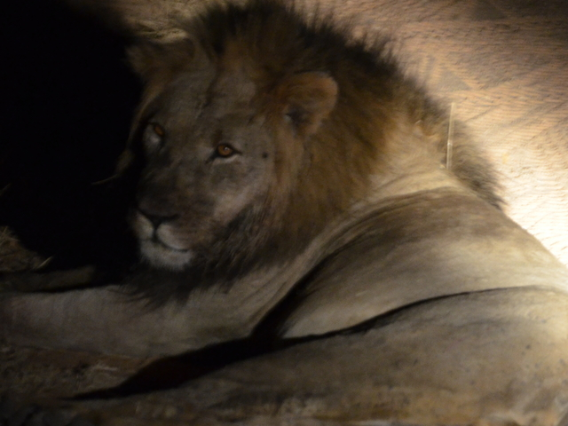 Kruger National Park Safari Package Photos