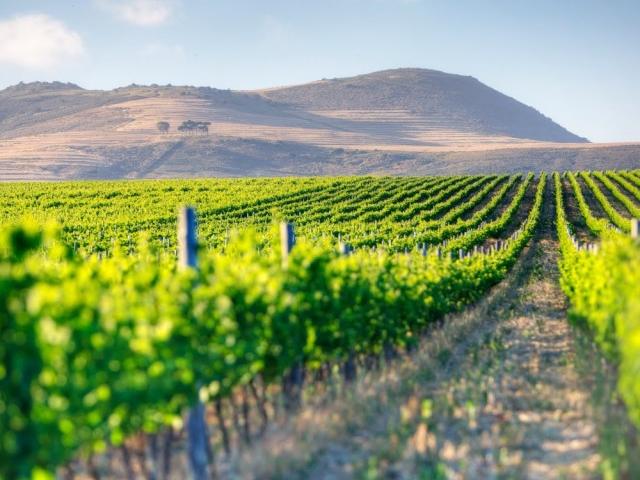 Cape Winelands Day Tour Photos