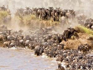 Trip to Maasai Mara