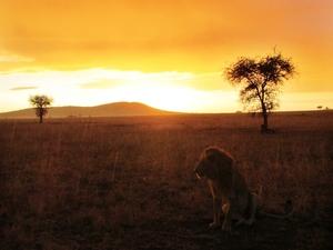 Big Five Safari Photos