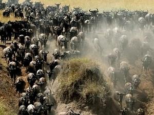 Best Deals for Maasai Mara Fotos