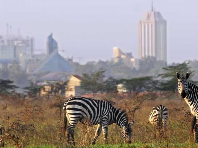 Nairobi National Park Day Tour Photos