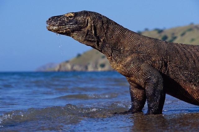 Komodo Island Travel Photos