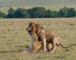 Budget Safari Masai Mara Photos