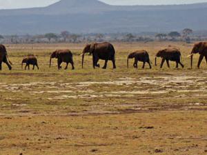 Kenya Classics Safari Private Fotos