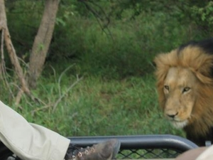 The Kruger National Park Explorer Photos