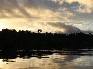 Cuyabeno Wildlife Reserve - Amazon Rainforest
