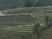Jati Luwih Rice Terraces