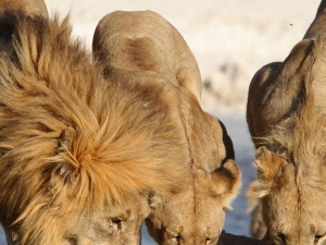 Popular Scenic Attractions in Namibia Photos