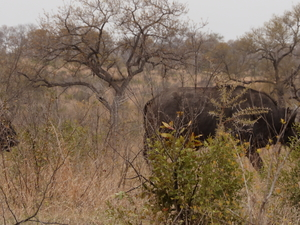 Budget Kruger Safari in a Hut for 3-Days Photos