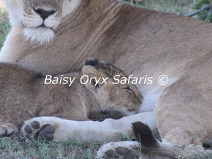 Highlight of Kenya Urban and Bush Safari Photos