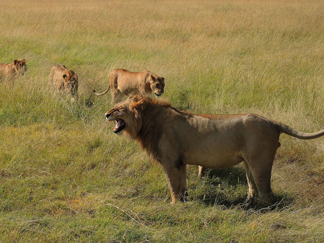 Masai Mara - Luxury Accommodation by a Hippo Pool Photos