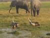 Adventurous Safari in Kenya