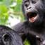 Gorilla Kubwafive Safaris