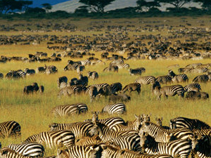 Decagon Safari: Great Wildebeest Migrations Fotos