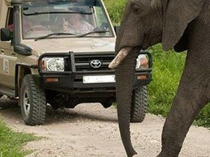 Octagon Safari: Masai Mara Group Safari Fotos