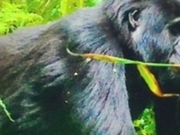 10 Days Ultimate Big Five & Gorillas of Uganda Odyssey