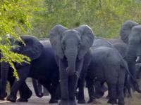 Little Serengeti Safari