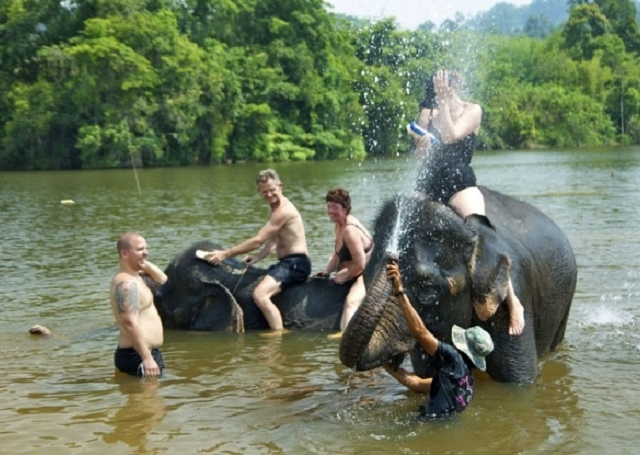Half Day Elephant Riding, Bathing and Whisky Villages Photos