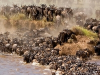 Serengeti National Park The Great Migration