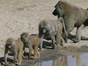 Kenya Safari Fotos