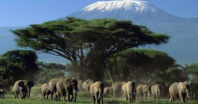 Kilimanjaro Climbing, Hiking & Expeditions Photos
