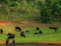 Cochin, Thekkady and Kumarakom Package