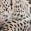 Oltumure Safaris