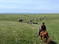 Bar W Guest Ranch Cattle Drive