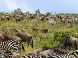 Migration Budget Safari Photos