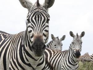 Weekly Nairobi National Park Guided Tours Photos