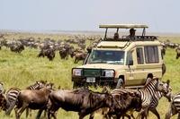 Axis Safaris