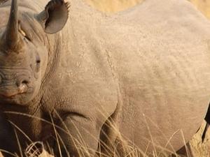 Adventure Kenya Safaris Photos