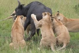 Explore Wild Kenya Photos