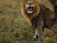 4-Day Safari Manyara Or Tarangire, Serengeti, Ngorongoro