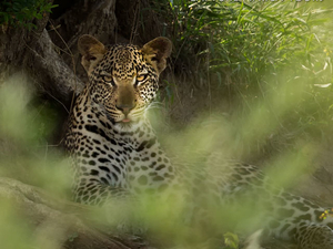 Guided Greater Kruger National Park Tour