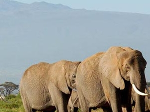 Safari Kenya & Tanzania Fotos
