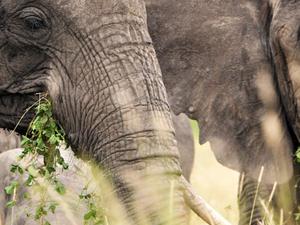 Rhino of Ngorongoro and Zanzibar Safari Photos