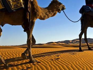 Marrakech To Merzouga Desert Tour Photos