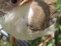 Bird Watchers Paradise Safari From Nairobi